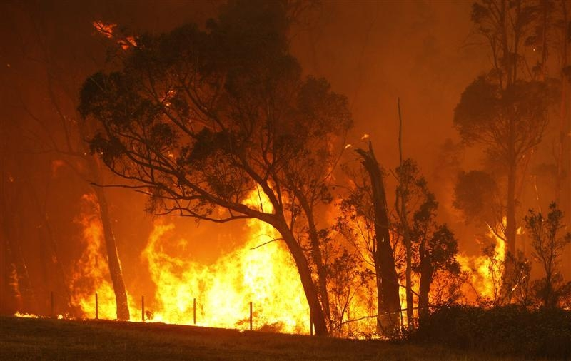 Black friday bushfires videos