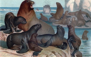 Sea-Lions-Print-GraphicsFairy-sm