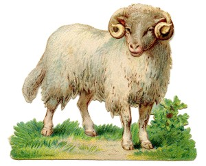 Sheep-Image-Vintage-GraphicsFairy1