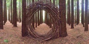 RedwoodsArtDavidDigapony