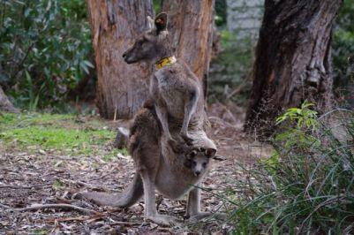 Itsy+PY at CSIRO