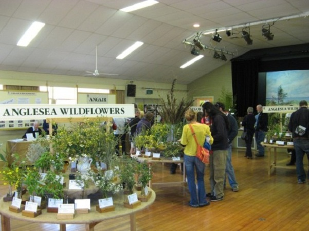 angair-annual-wildflower-weekend-and-art-show hall display