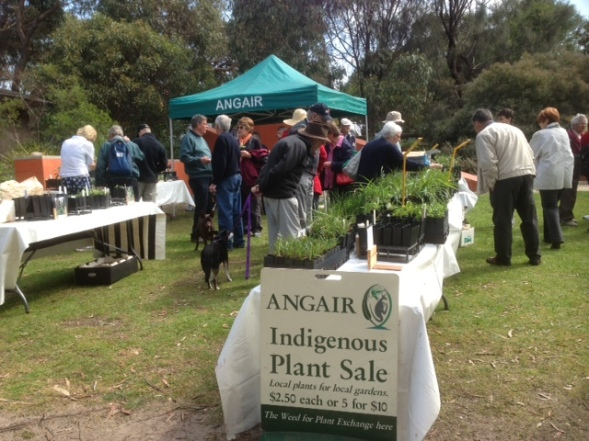 Plant stall - visitors buying plants