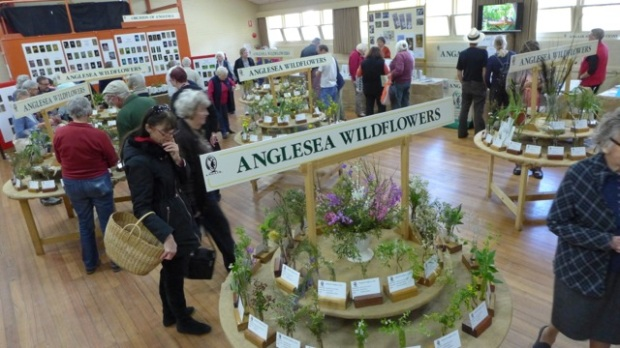 Wildflowers on display