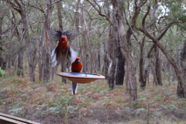 bambra-birds-1
