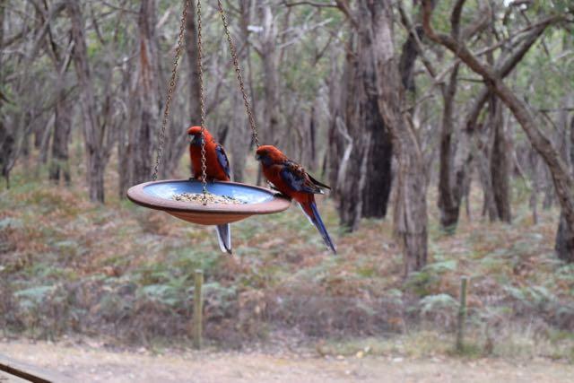 bambra-birds-2