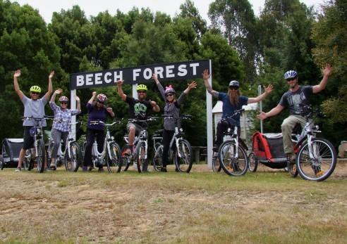 go-beech-forest