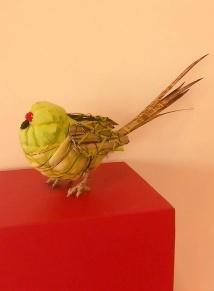 caroline eastern ground parrot