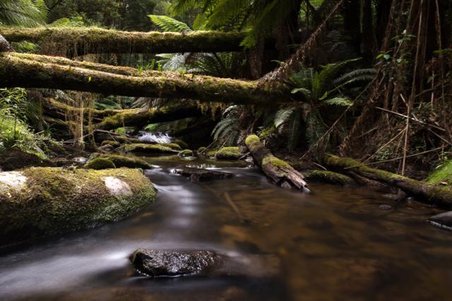 Deppeler Creek.jpg
