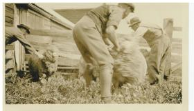old tarndwarncoort shearing shed