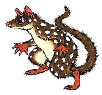quoll_small